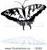 Royalty Free Stock Illustration of a Black and White Butterfly Logo with a Reflection by Dero