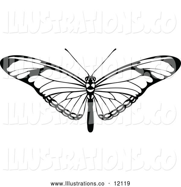 Royalty Free Stock Illustration of a Black and White Butterfly